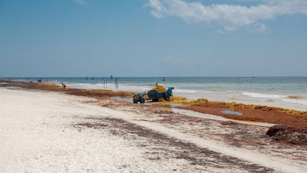 Playa del Carmen: Additional Barriers Added to Aid in Keeping Sargassum Away